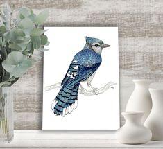 Blue Jay fine art illustration. Bird art by carlaJ | Etsy