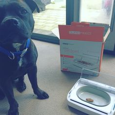 Leo is pretty stoked about his new motion sensor food bowl! Check out @sureflappets for more innovative pet accessories!…