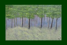 Bosque de encinos - Óleo sobre papel - 50x32