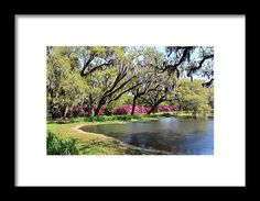 Nature Framed Print featuring the photograph Beauty By The Pond by Cynthia Guinn
