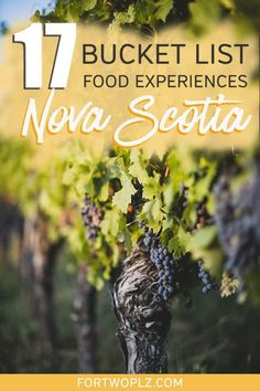 [East Coast Canada Road Trip] How To Plan Your Nova Scotia Holiday Around Food - [Canada Travel] Nova Scotia is a must see on your Canada road trip! The Canadian Maritimes province - Alberta Canada, Quebec, Ottawa, East Coast Canada, Nova Scotia Travel, Ontario, Top Vacation Destinations, Vacations, Canada Vancouver