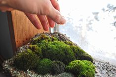 Growing moss is easier than you think and can provide great health benefits. Learn types of moss, and how to grow moss indoors. Terrariums, Moss Terrarium, Terrarium Ideas, Orchid Terrarium, Bone Marrow Food, Organic Gardening, Gardening Tips, Indoor Gardening, Garden Plants