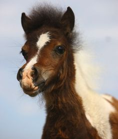 miniature horse.... how cute!!!!