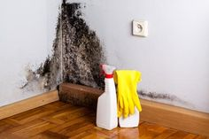 black mold and bleach