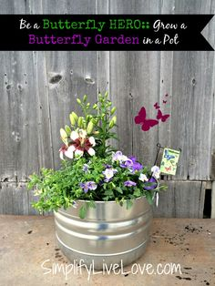 Be a Butterfly Hero - Grow a Butterfly Garden in a Pot. Butterfly habitats are on the decline. It's possible to help them even with a small space! #ad