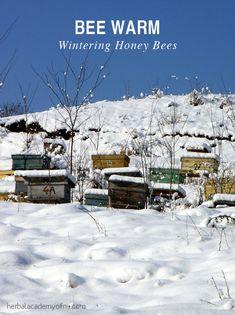Bee Warm: Wintering Honey Bees   Herbal Academy of New England