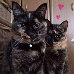 Chii & Tsuki  (via tatsuki-128)
