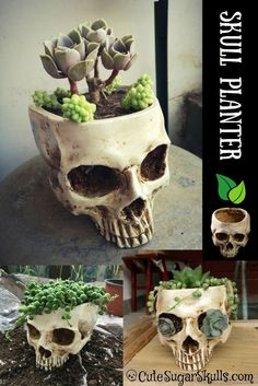 Cute little skull planter