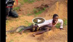 Cobra snake killing attack on men such a dangerous video