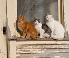 Three cats sitting outdoors on peeling window ledge with tree reflection in glass