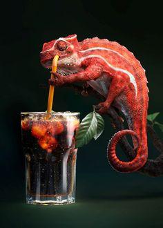 Colameleon by Alex Broeckel. #thirsty
