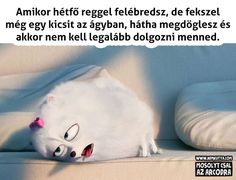 . Cute Jokes, Funny Jokes, Everything Funny, Really Funny, Funny Moments, Bff, Funny Animals, Haha, Funny Pictures