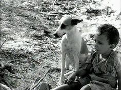 Vidas Secas - a cadela Baleia, protagonista de uma das cenas mais doloridas da história do cinema.