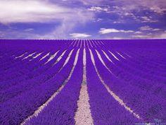一度は行ってみたい!世界にある紫の花が美しい絶景スポット - NAVER まとめ