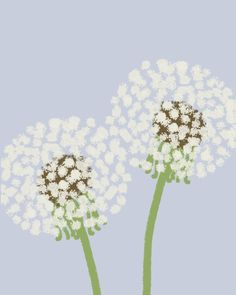 dandelion puffs - joreyhurley.com