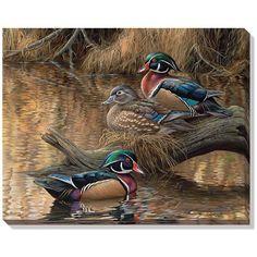 """Sitting Pretty (Wood Ducks)"" Wrapped Canvas ArtFor $54.99"