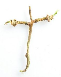 Cross made by nature