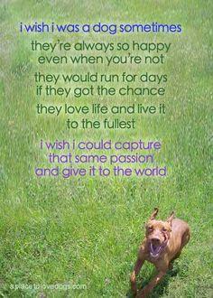 I wish I was a dog sometimes...