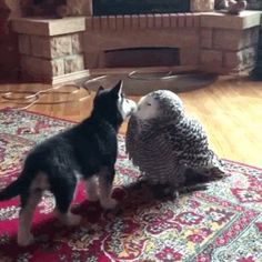 Pup pup and owly givin each other kisses