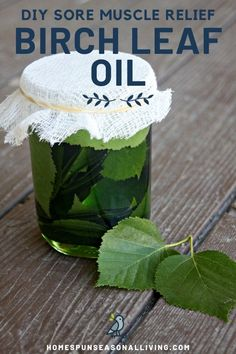 Sore Muscle Relief with DIY Birch Leaf Oil - Get herbal relief for sore muscles from the pain-relieving and anti-inflammatory properties of birc - Cold Home Remedies, Natural Health Remedies, Herbal Remedies, Les Muscles Endoloris, Sore Muscles, Healing Herbs, Natural Healing, Holistic Healing, Diy