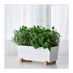 10 Things: Pots for Your Houseplants--Bittergurka plant pot, Ikea, Indoor Plant Pots, Indoor Planters, Hanging Planters, Potted Plants, Planter Pots, Faux Plants, Indoor Herbs, Outdoor Plants, Pots For Plants