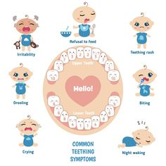 Baby teething symptoms vector image on VectorStock Baby Teething Chart, Baby Teething Symptoms, Baby Teething Schedule, Remedies For Teething Babies, Baby Trivia, Baby Chart, Tooth Chart, Baby Life Hacks, Baby Information