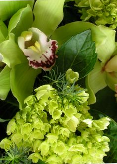 two of our perennial faves at Terrain Flowers - green orchids and green hydrangea