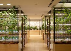 Tomato vines, fruit trees and broccoli fields are part of everyday working life at the urban farm at Pasona HQ in Tokyo, Japan by Kono Designs