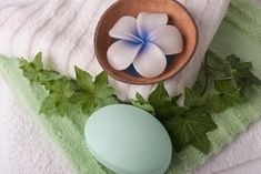 Cuáles son las mejores plantas para el baño - unComo