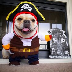 French Bulldog in Pirate Costume, via Life of Nova The Frenchie
