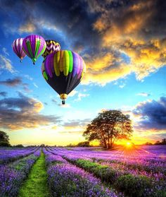 Picture of Beautiful image of stunning sunset with atmospheric clouds and sky over vibrant ripe lavender fields in English countryside landscape with hot air balloons flying high stock photo, images and stock photography. Pretty Pictures, Cool Photos, Amazing Photos, Live Photos, Pictures Images, Colorful Pictures, Nature Pictures, Beautiful World, Beautiful Places