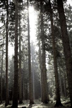 """Location scouting for """"Im Herzen Unruh"""" (2010), Vöhrenbach, Black Forest"""