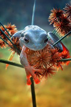 ριntєrєѕt: rayneslays - Ranger frog