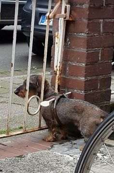 18 People Who Took The Art Of Laziness To A Whole New Level  - This pet owner who didn't want to install a new gate to keep their dog from escaping.