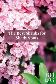 These beautiful shrubs will enhance your shady backyard! Some even produce fragrant flowers. Here's a list of our favorite shrubs for shade.