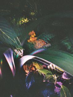 sullenmoons: Jardin botanique de Montréal - Papillons en liberté