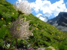 Emozioni alpine d'estate: http://www.trekking-alpi-blog.it/giro-del-monviso-gran-paradiso-alpi-guida/