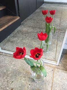 왜? 내가 자리 비울때 손님이 오는 거지??  어제도 보람씨 왔었음...... ㅎㅎㅎ  고마워요!!!  이번엔 빨간 꽃  낮에는 피고 저녁이 되면 닫는 꽃 송이!