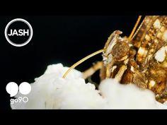 Love Again (feat. Gangsta Boo) - Run The Jewels - YouTube