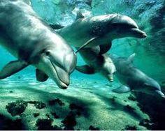 Underwater life..