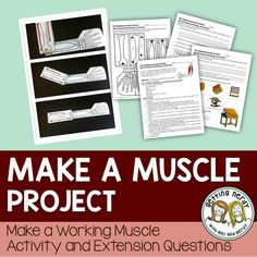Learn how the skeletal and muscular systems work together by making a working muscle and learn the b Biology Lessons, Science Lessons, Life Science, Pe Lessons, Human Body Unit, Human Body Systems, Science Classroom, Teaching Science, Teaching Ideas