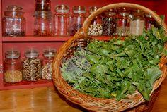 Liste de plantes sauvages à cuisiner