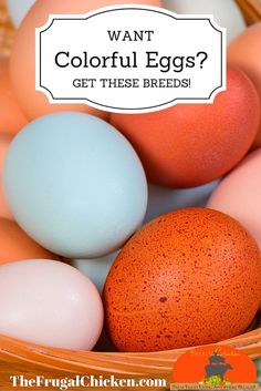 Colored eggs are so pretty! Here's which breeds lay what color!