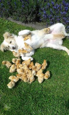 And THESE chicks who just made a new best friend. | 42 Pictures That Will Make You Almost Too Happy