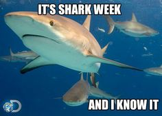 Shark Week - 2013