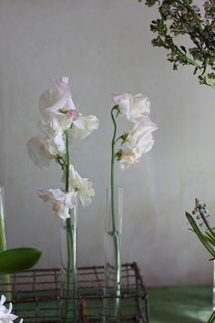 Simple beauty,  Sweet Peas in tall cylinders