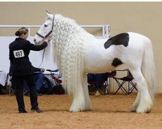 I want this pretty horse!