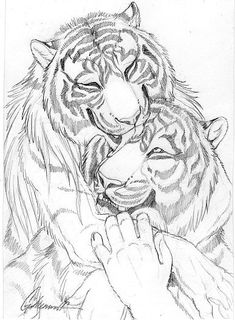 Cuddly Couples - Tigers01 by Goldenwolf on DeviantArt