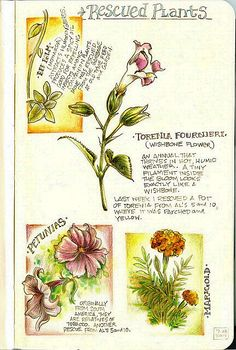 Garden Journal with beautiful botanical illustrations