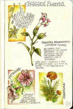 Garden Journal with beautiful botanical illustrations
